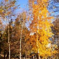 Золотая осень :: Владимир Болдырев
