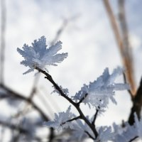 Цветы  из снега :: Нина Сигаева