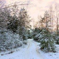 По лесной дорожке. :: Hаталья Беклова