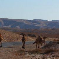 Иудейская  пустыня :: Natalia