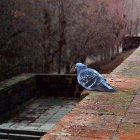 В Одиночестве :: Лариса Коломиец