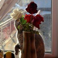 Любительница цветов :: Валерий Лазарев