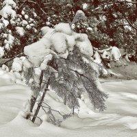 Снег :: Дмитрий Конев