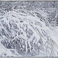 Сказка зимы :: Любовь Чунарёва