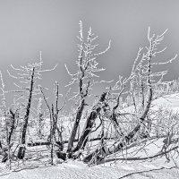Зима в Сибири. :: Егор Балясов