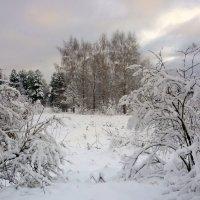 Зимняя зарисовка :: Павлова Татьяна Павлова