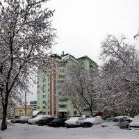 первые опыты зимы :: gribushko грибушко Николай