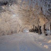 Вот такой туннельполучился из изморози. :: Сергей Щербаков