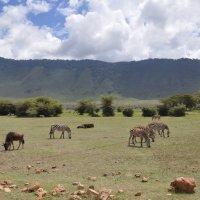 Танзания. Нгоронгоро. :: Елена Савчук