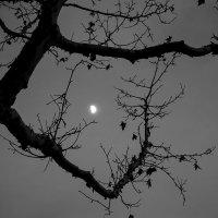 Лунная ночь... :: Людмила Синицына