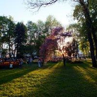 майские тени :: Александр Прокудин