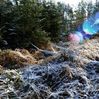 Морозным утром в лесу :: Милешкин Владимир Алексеевич
