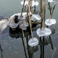 начало зимы :: Евгения Ки