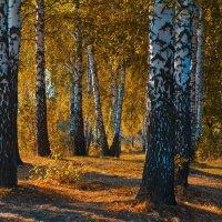 Осень :: Игорь К.