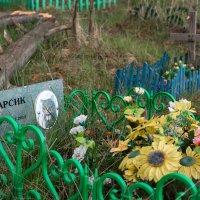 кладбище домашних животных :: Евгений Поляков