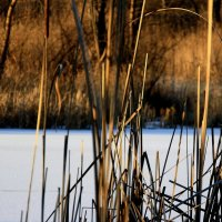 Лёд  на пруду...  а  травы  осенние.... :: Валерия  Полещикова