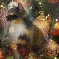 Дед Мороз, Дед Мороз, ты колбаску мне принес? :: Tatiana Markova