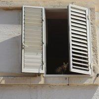 Кот в окне :: Ира Балкина