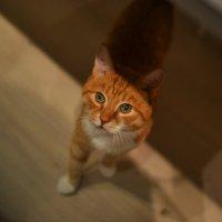 Кот переходит на светлую сторону :: Tatiana Gut