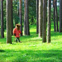 В сказочном лесу. :: Николай Крюков