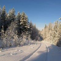 Таежный морозец... :: Геннадий Северный