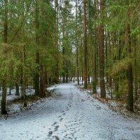 Следы на снегу :: Милешкин Владимир Алексеевич