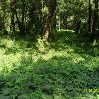 Захмелевший лес :: Виктор Мухин