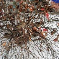 первый снег :: helga 2015