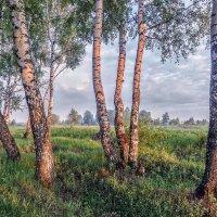Розовое утро :: Николай Андреев