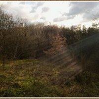 В лучах декабрьского солнца... :: Николай Дони