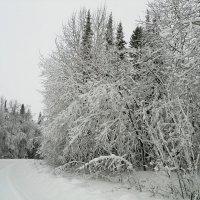 После снегопада :: Александр Щеклеин