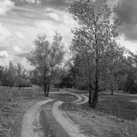 Дорога в лес :: Надежда