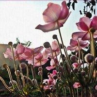 Акварельные мазки по цветам :: Лидия (naum.lidiya)