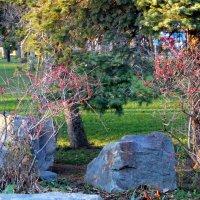 Парк в декабре... :: Тамара (st.tamara)
