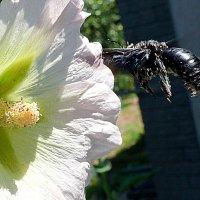 Синяя пчела 5/5 :: Асылбек Айманов