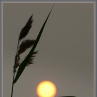 Травинки играют с солнцем... :: Валентина. .