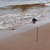 Морской змеёныш :: Михаил Лобов (drakonmick)