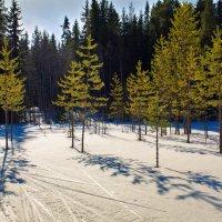 Светлая поляна :: Валентин Кузьмин