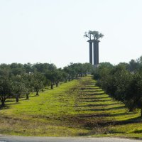 Оливковые плантации кибуца Рамат Рахель :: Игорь Герман