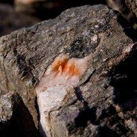 Кварцевая жила в камне :: Игорь Ананьев