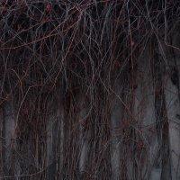 Цвет ноября :: Анна Куценко