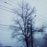 Туманный декабрь :: Кристина Кеннетт