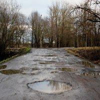 Дождливый день :: Наталья Лунева
