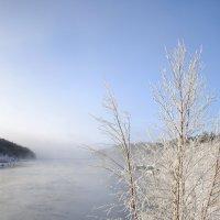 Зима в тумане :: Ольга