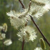 пахнет весной :: helga 2015