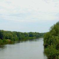 Река Медведица-приток Дона. :: Aлександр **