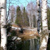 Озеро в дендропарке :: Лариса Чудиновских