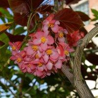 тропические цветы :: Мария Букина