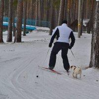 Лыжню! :: cfysx