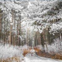 Зимний лес :: Станислав Любимов